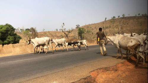 Northern Youths Supports Southern Governors' Ban On Open Grazing, Says It's Threat To The North